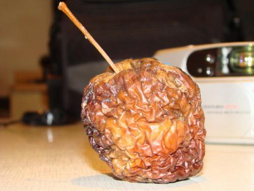 Galeria owoc