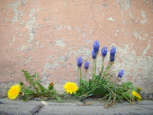 Galeria Wiosna